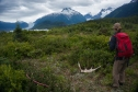 Moose sheds in wild places